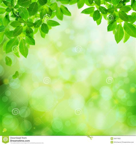 Green Natural Abstract Background Stock Photo Image