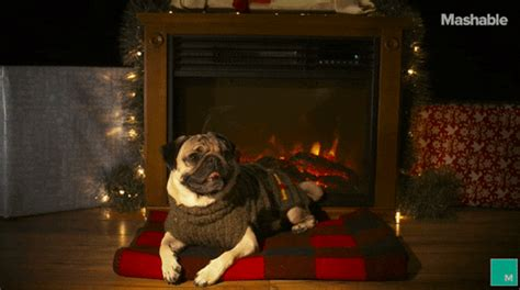 yule log gifs find share  giphy
