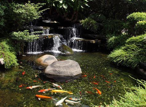 Types Of Fish For Garden Ponds  Backyard Design Ideas