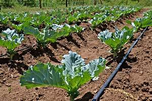 Drip Irrigation System | Phoolbari- A Garden (फूलबारी- एक ...