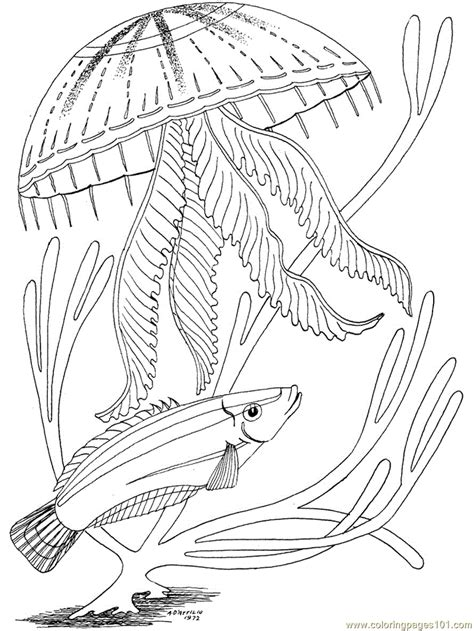 ocean fish coloring page  oceans coloring pages coloringpagescom