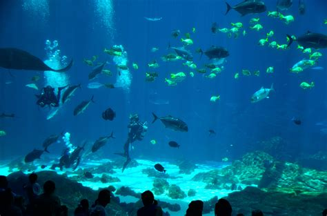 images sea nature ocean animal tropical color