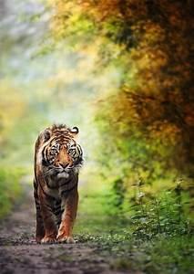 147 best images about Amazing Wildlife on Pinterest ...