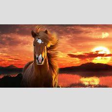 Schöne Pferde Hintergrundbilder  Googlesuche Schöne