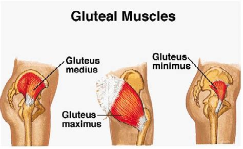 Got Your Gluteal Muscle Pulled? Know The Signs