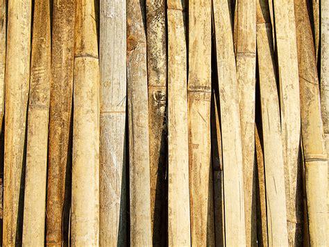 banco de imagens ramo textura prancha tronco parede