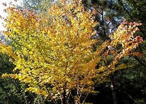 Kleiner Baum Mit Breiter Krone : schattenb ume gr ner sonnenschutz f r die terrasse ~ Michelbontemps.com Haus und Dekorationen