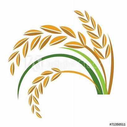 Rice Vector Similar Vectors Royalty Comp Contents