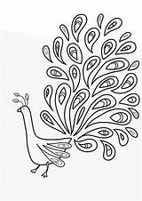 Coloring Pages Printable Peacock Bird Peacocks Sheets Printout Draw sketch template