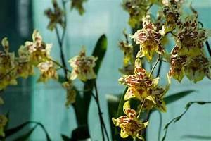 Comment Soigner Une Orchidée : soigner les orchid es en pot l 39 atelier des fleurs ~ Farleysfitness.com Idées de Décoration