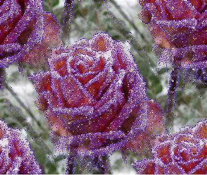 Roses Scintillantes Rose Gifs Sparkling Centerblog Tatou
