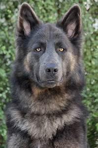 Pin von Bobbi Loughran auf Dogs | Pinterest | Beautiful ...