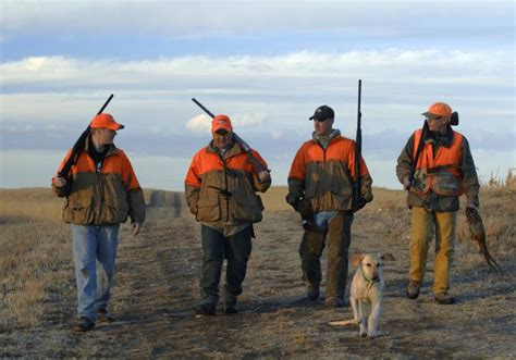 Pheasant Hunting Season - South Dakota - Travel & Tourism Site