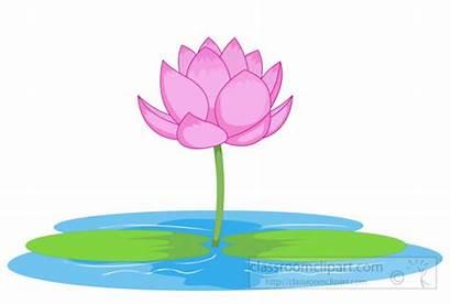 Lotus Pond Clipart Clip Flower Wetlands Flowers