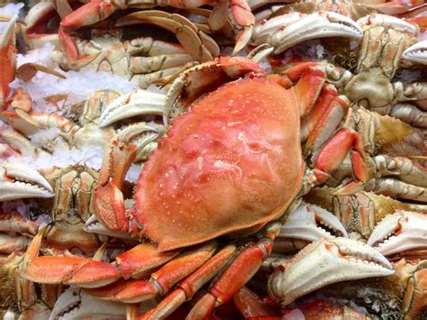 how to cook crab top 28 how to cook crabs how to cook sand crabs livestrong com how to cook crab on the
