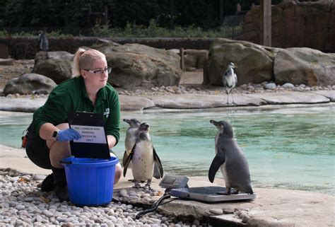 zoo animals london weigh zoological