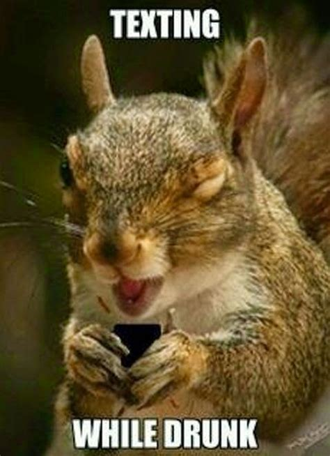 Funny Squirrel Memes - squirrel texting while drunk silly bunt