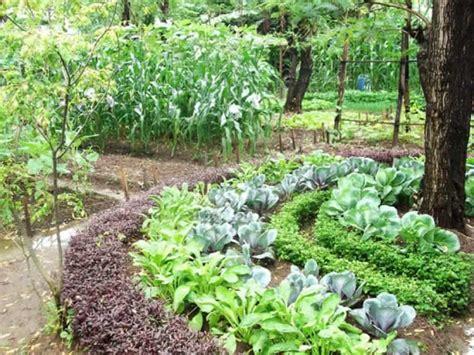 biointensive gardening growing vegetables effective