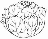 Lettuce Coloring Pages Vegetables Fruits Vegetable Food Colouring Fruit Leaf Drawing Printable Templates Sheets Template Autumn Preschool Orange Preschoolactivities Lechuga sketch template
