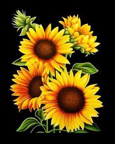 sunflower  juan alcantara     home