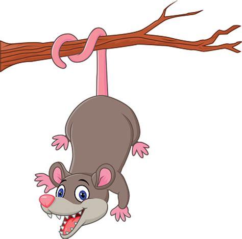 opossum clipart opossum clipart clipart best