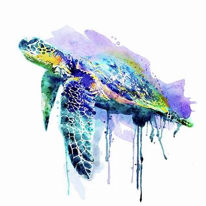 Turtle Watercolor Sea Marian Voicu Painting Paintings