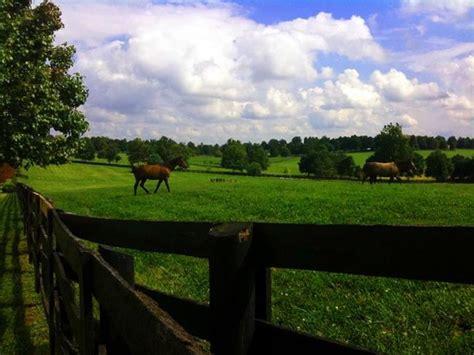 kentucky bluegrass day  pamela ann lee  photography