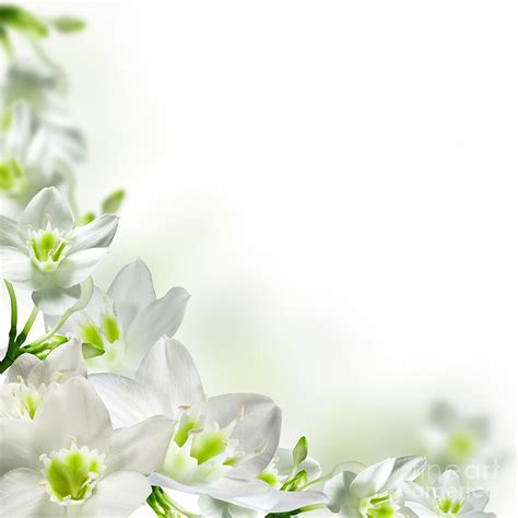 small white border flowers white flower frames photograph by boon mee