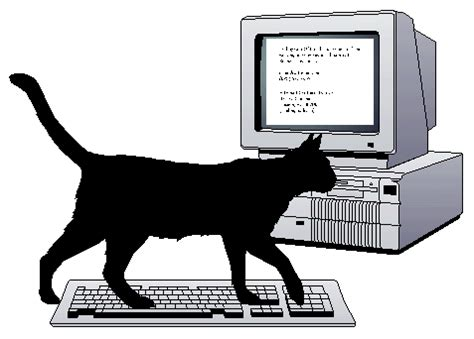 cat keyboard catproofing your computer and computer proofing your cat