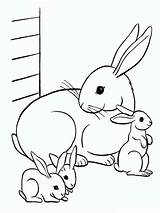 Coloring Pages Rabbits Printable Animals Print sketch template