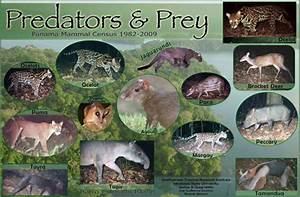 Predator and Prey Poster - College of Science and Mathematics