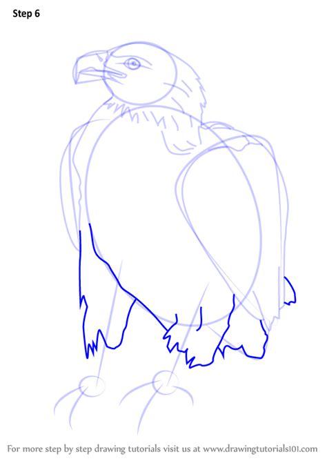 learn   draw  bellied eagle bird  prey step