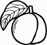 Peach Coloring Peaches Printable Clipart Clip Outline Appricots Coloringpages101 984px 87kb 1024 Drawings Popular Clipartmag sketch template