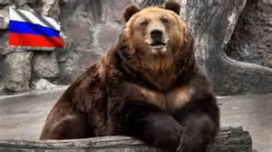 Медвежьи — википедия переиздание wiki 2