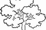Oak Tree Coloring Clipart Silhouette Designlooter Presentations Websites Reports Powerpoint Projects Roots sketch template