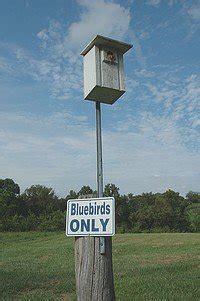 bluebird house plans multiple designs