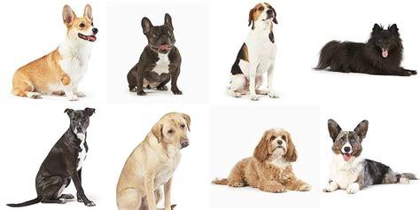 meet dogs amazon helped soften blow site