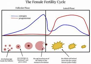 The Hormones of the Menstrual Cycle (and why they matter ...