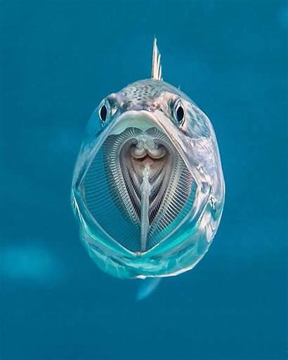 Ocean Sea Deep Creatures Fish Please