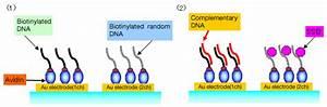 Biosensor  Qcm System     Nihon Dempa Kogyo  Ndk  Co  Ltd