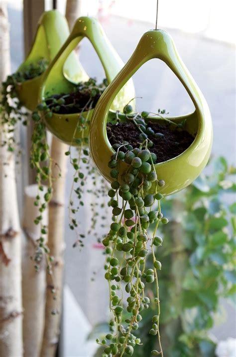plante d intérieur originale plante verte originale photo de fleur une pensee fleuriste