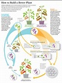 The Truth about Genetically Modified Food   Genetically ...