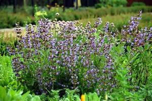Bodendecker Blaue Blüten : kr uterbeet ~ Frokenaadalensverden.com Haus und Dekorationen