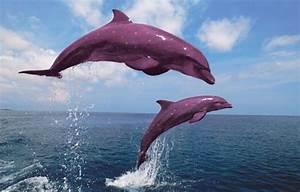 Pink Dolphin - Boto or Albino? - 27 Pics - Animal's Look