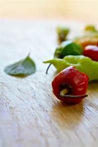Plateful: Spicy Noodle Stir-Fry with Vegetables — Super ...