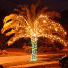 1000 images about Lighted Palm Trees on Pinterest