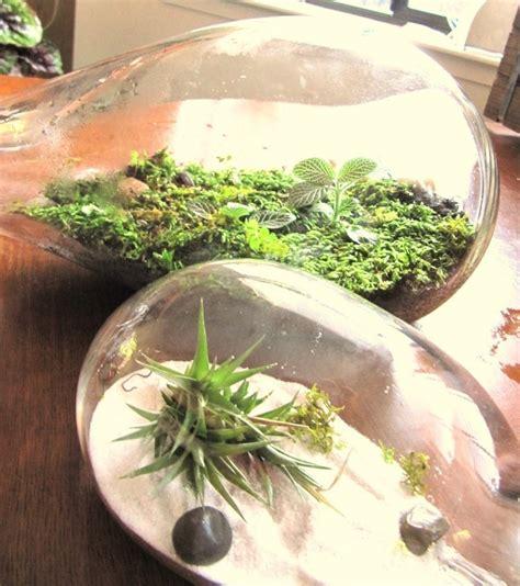 blown terrarium 278 best images about terrarium on pinterest leaded glass miniature and august 19
