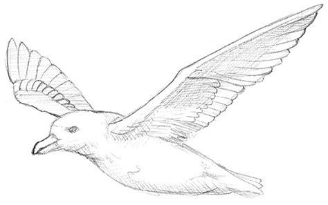 fluegel zeichnen