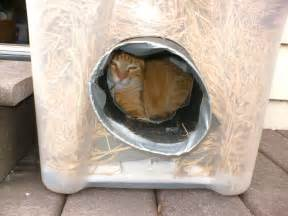 the best cats how to make a winter shelter for an