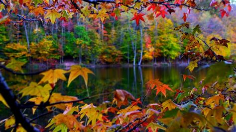 Colourful Autumn Wallpaper by Beautiful Autumn Landscape In The Colorful Forest